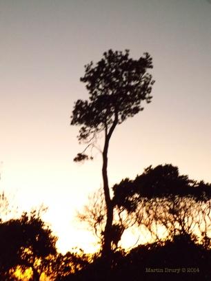 Korora Sunrise Two - 01