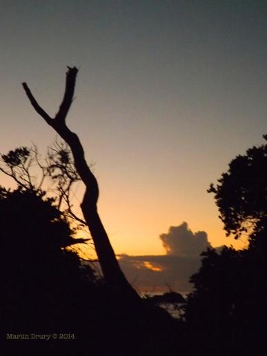 Korora Sunrise Two - 02
