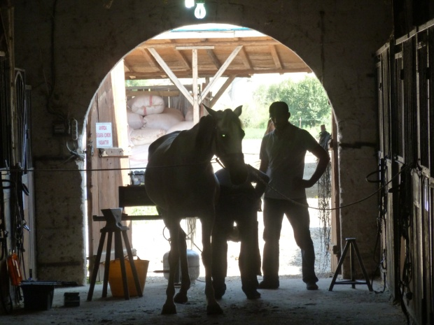 Shoeing the horses
