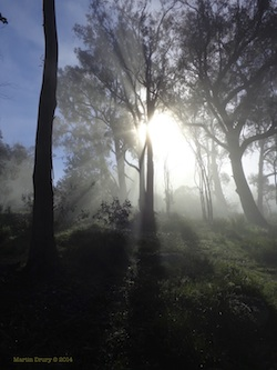 Feature Image - Canberra Mist